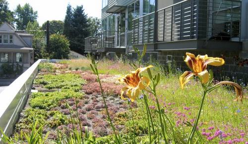 Tạo khu vườn xanh mát trên sân thượng | ảnh 20