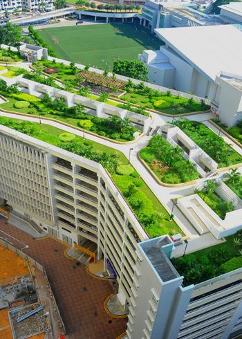 Phủ xanh nóc nhà cao tầng với công viên mini | ảnh 3