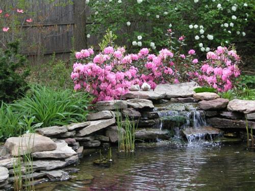 Một vài ý tưởng mang ao nhỏ vào nhà vườn | ảnh 7