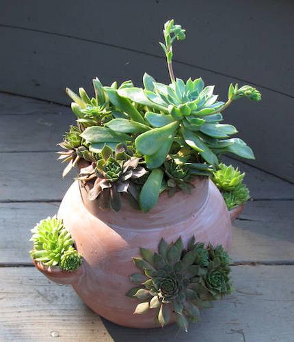 Làm đẹp khu vườn nhà bạn với hoa đá | ảnh 1