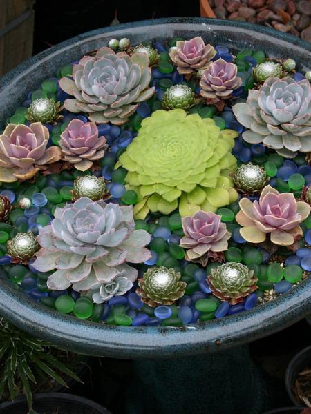 Làm đẹp khu vườn nhà bạn với hoa đá | ảnh 5
