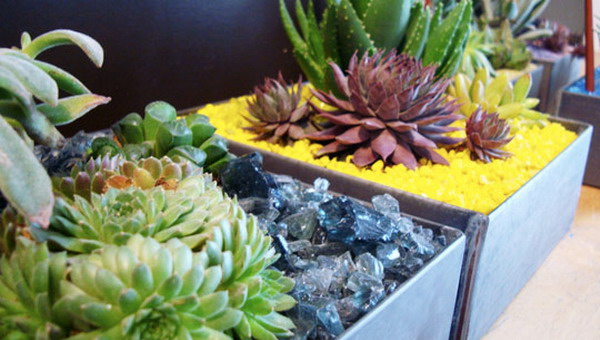 Làm đẹp khu vườn nhà bạn với hoa đá | ảnh 6