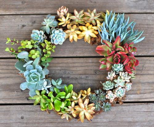 Làm đẹp khu vườn nhà bạn với hoa đá | ảnh 7