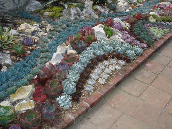 Làm đẹp khu vườn nhà bạn với hoa đá | ảnh 8
