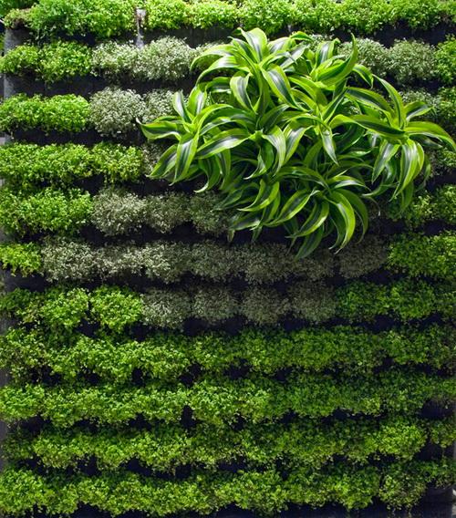 Thiết kế tường xanh: Xu hướng hiệu quả trong kiến trúc | ảnh 5