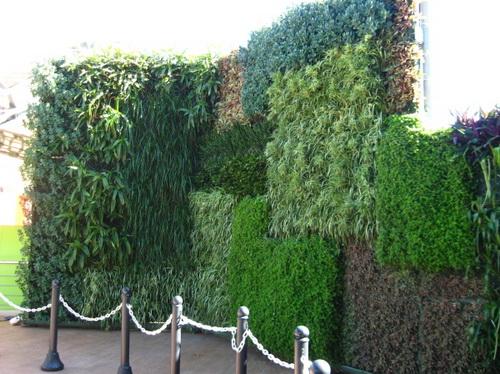 Thiết kế tường xanh: Xu hướng hiệu quả trong kiến trúc | ảnh 6