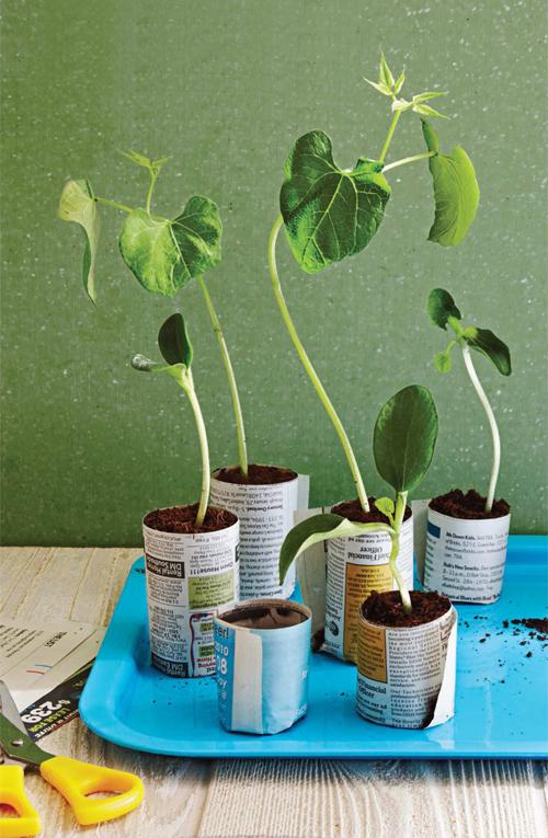 Ý tưởng thú vị để có những góc nhỏ xanh um cây cối trong nhà | ảnh 3