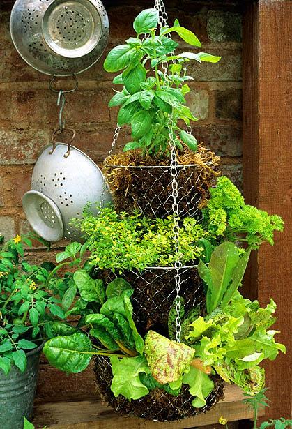 Ý tưởng thú vị để có những góc nhỏ xanh um cây cối trong nhà | ảnh 8