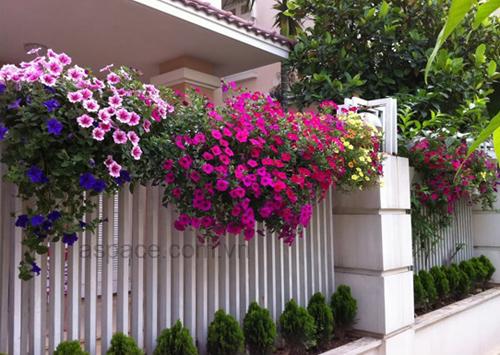 Hàng rào dây hoa xinh xắn cho ngôi nhà của bạn | ảnh 10