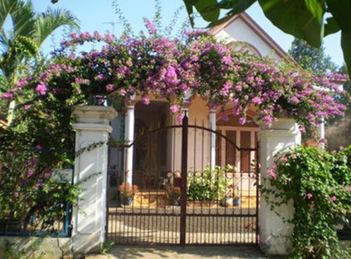 Hàng rào dây hoa xinh xắn cho ngôi nhà của bạn | ảnh 3