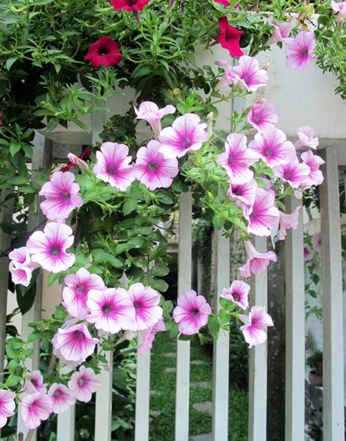 Hàng rào dây hoa xinh xắn cho ngôi nhà của bạn | ảnh 1