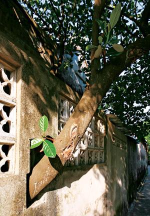 Xanh kiến trúc, xanh vật liệu, và xanh… thái độ | ảnh 2
