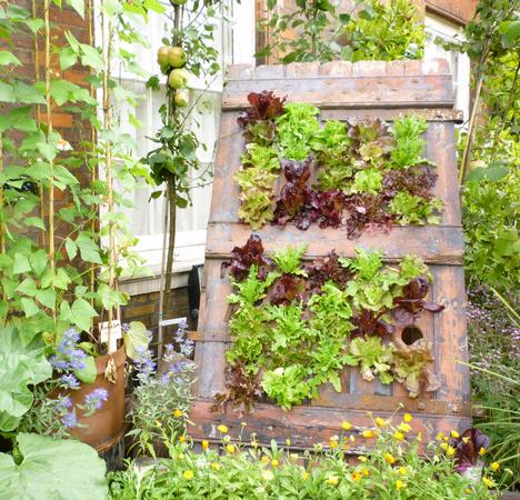 Tạo cho khu vườn đẹp bất ngờ từ cánh cửa cũ | ảnh 11