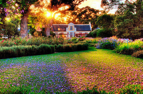Tạo vẻ đẹp ấn tượng cho vườn nhà | ảnh 2
