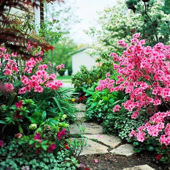 Tạo vẻ đẹp ấn tượng cho vườn nhà | ảnh 3