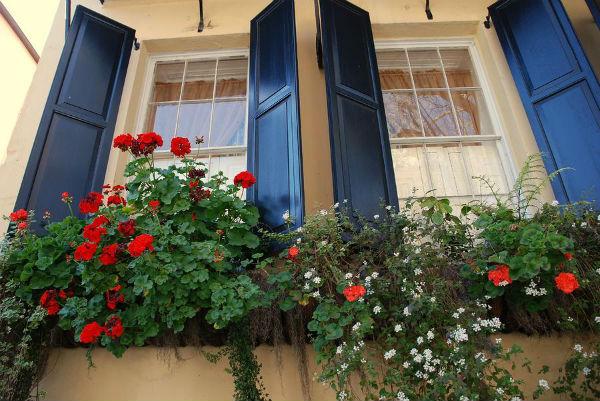 Sắc hoa rực rỡ cho những ô cửa sổ | ảnh 1