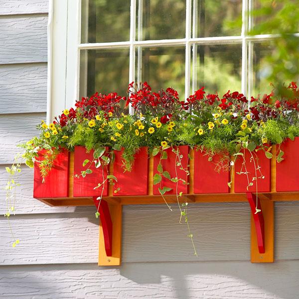 Sắc hoa rực rỡ cho những ô cửa sổ | ảnh 2