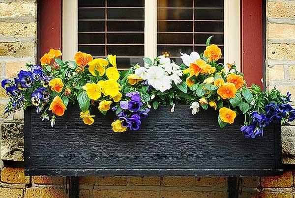Sắc hoa rực rỡ cho những ô cửa sổ | ảnh 8