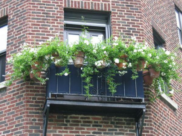 Sắc hoa rực rỡ cho những ô cửa sổ | ảnh 9