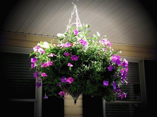 Khúc biến tấu hoa treo | ảnh 1