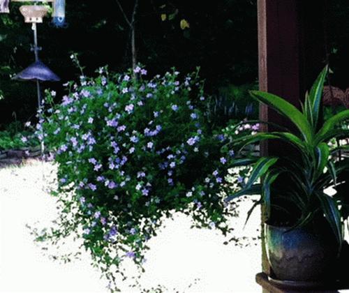 Khúc biến tấu hoa treo | ảnh 4
