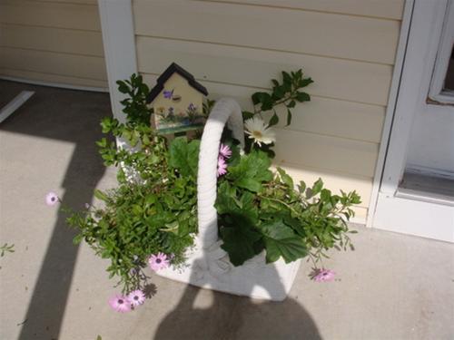 Khúc biến tấu hoa treo | ảnh 10