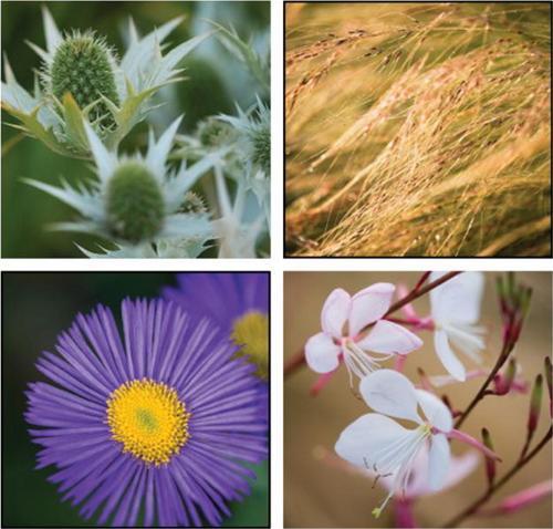 Bài trí khu vườn đẹp cho sân thượng | ảnh 5