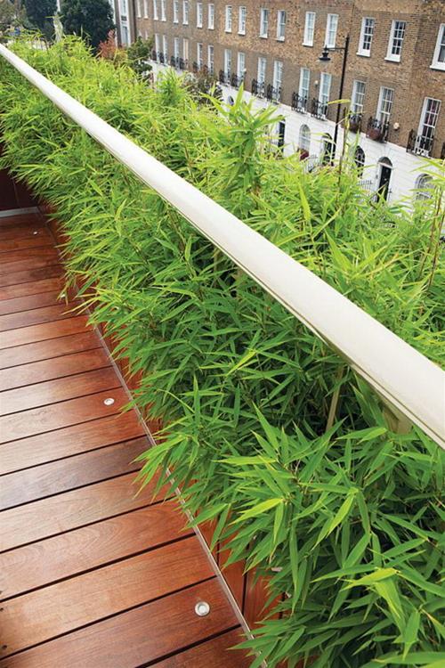 Bài trí khu vườn đẹp cho sân thượng | ảnh 9