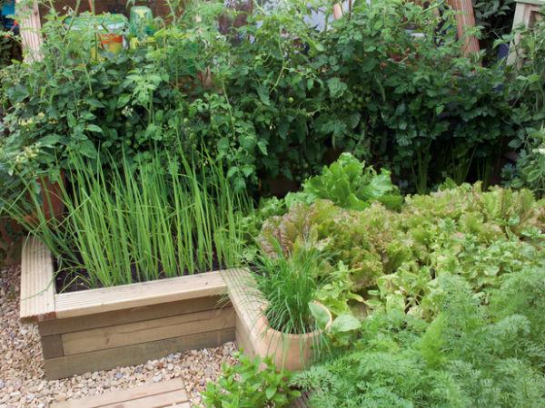 Tự tạo vườn rau xanh mát mắt cho nhà phố | ảnh 1