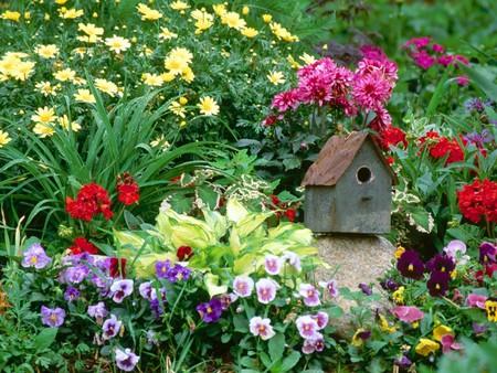 Dùng chuồng chim để...trang trí sân vườn | ảnh 2