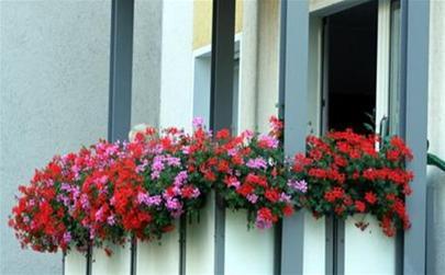 Rực rỡ ban công lá hoa | ảnh 5