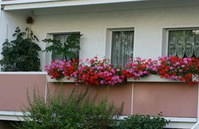 Rực rỡ ban công lá hoa | ảnh 6