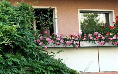 Rực rỡ ban công lá hoa | ảnh 7