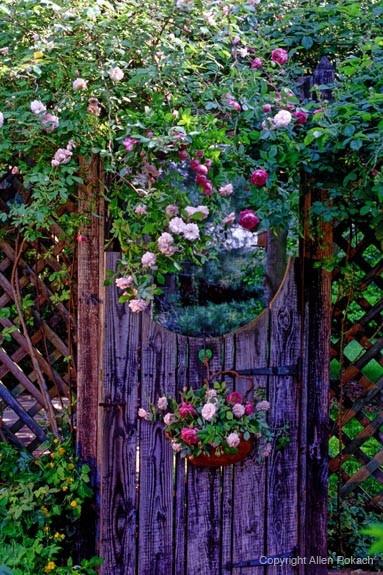 Cổng hoa rực rỡ đón khách vào nhà | ảnh 7