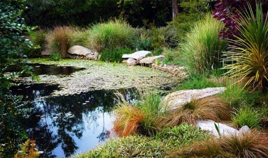 Ao nhỏ trong nhà vườn | ảnh 3