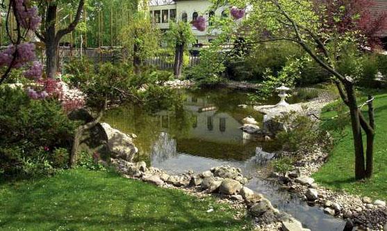 Ao nhỏ trong nhà vườn | ảnh 4