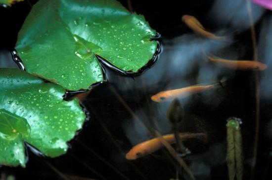 Ao nhỏ trong nhà vườn | ảnh 6